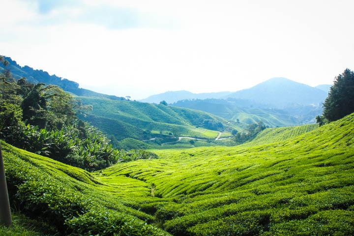 Two_Week_Malaysia_Itinerary_Cameron_Highlands