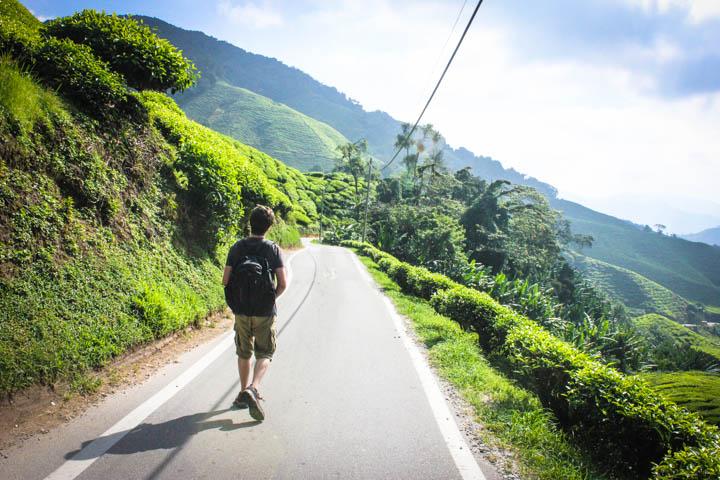 Two_Week_Malaysia_Itinerary_Cameron_Highlands_1