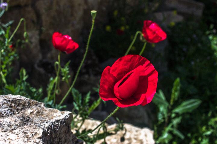 Jerash_Jordan_Roman_Ruins_4