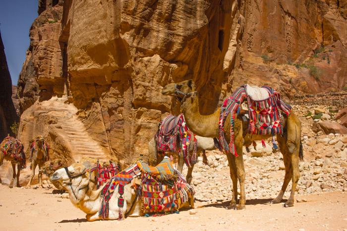 Petra_Jordan_Camels