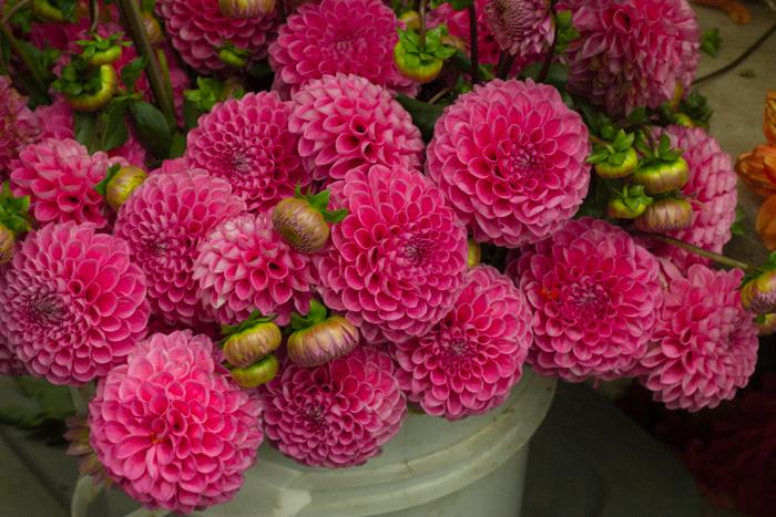 Seattle_Flowers