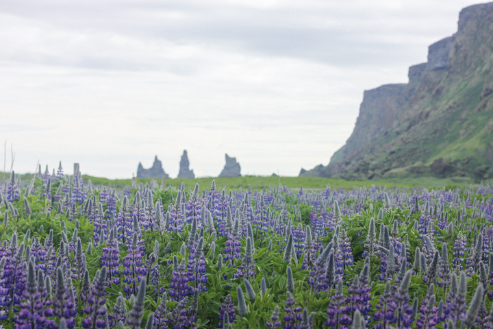 The 10 Most Surprising Things About Iceland