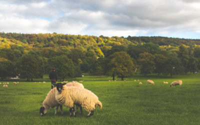 15 Photos That Will Make You Want to Visit the Peak District