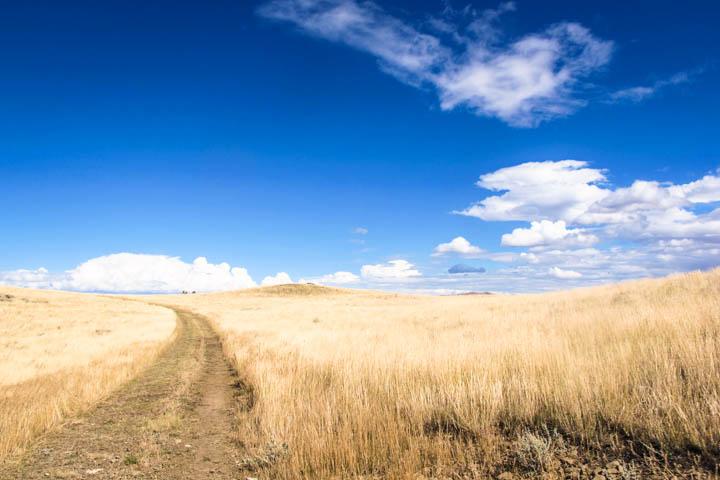 Montana_Ranch_Fields